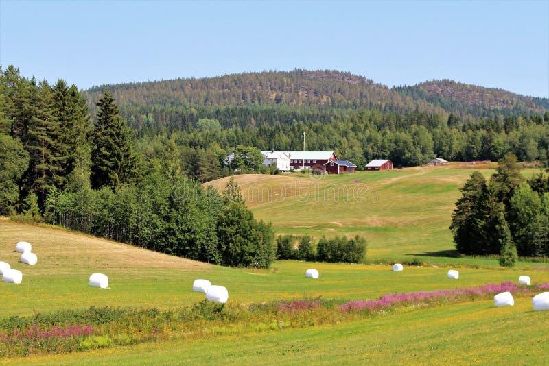 Красивый ландшафт лета в ngermanland Ã… стоковые изображения rf