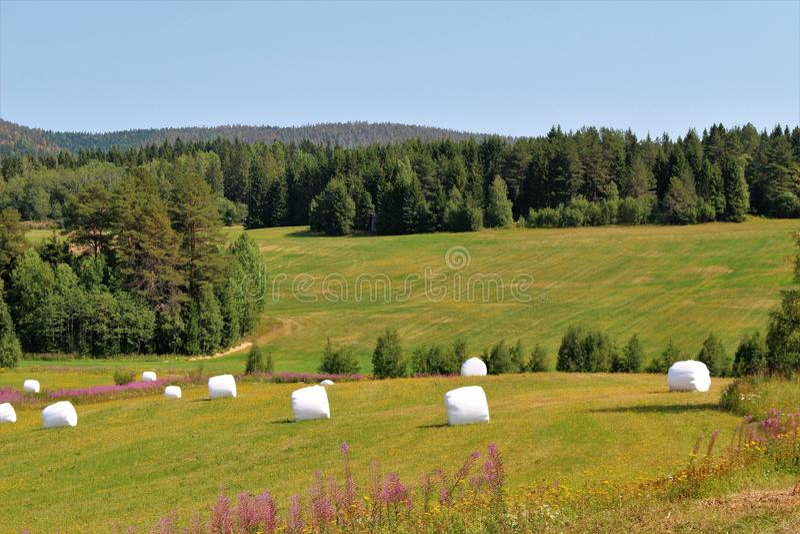 Красивый ландшафт лета в ngermanland Ã… стоковые изображения