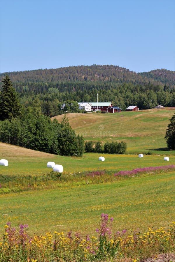 Красивый ландшафт лета в ngermanland Ã… стоковая фотография rf