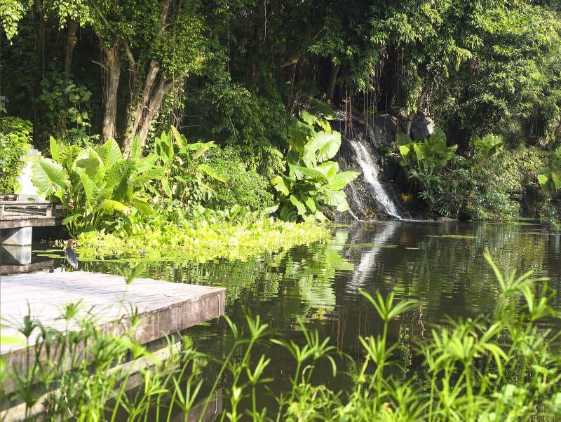 Красивый маленький водопад в тропическом лесе стоковое изображение