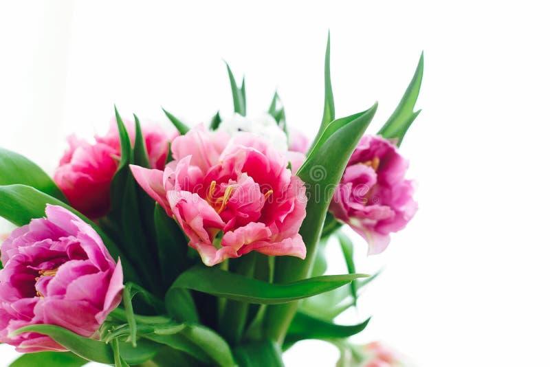 Красивый пинк и пурпурные тюльпаны в мягком свете Двойные тюльпаны пиона изолированные на белизне с космосом экземпляра Красочные стоковое изображение rf