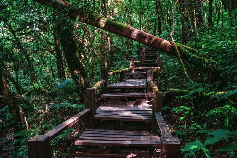 Красивый след джунглей тропического леса, след природы Luang Ka Ang, воспитательный след природы внутри тропического леса на пике стоковые фотографии rf