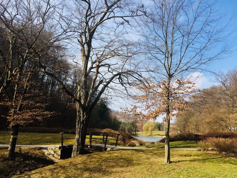 Красивый солнечный день в парке города Парк Mestni в Мариборе, Словении стоковые изображения rf