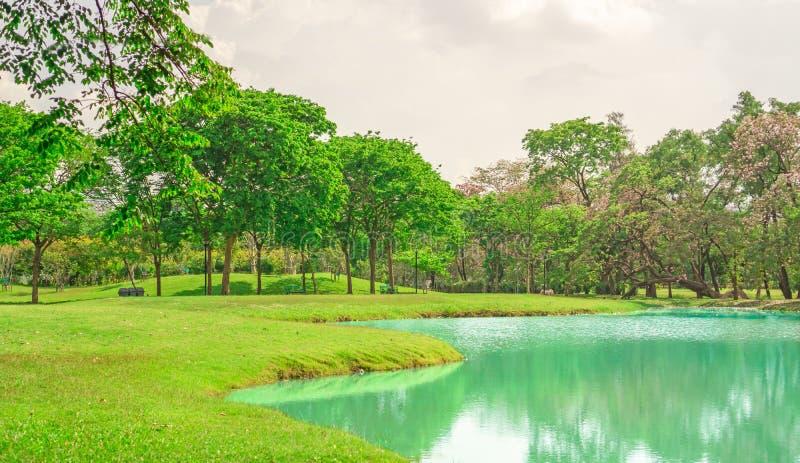 Красивое и хорошее mainternance парка под облачным небом, деревьями красоты на лужайке зеленой травы свежей около озера стоковая фотография