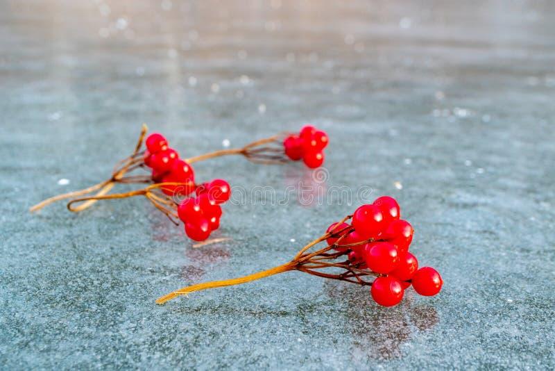 Красные ягоды калины на переднем плане лежат на льде стоковые изображения rf