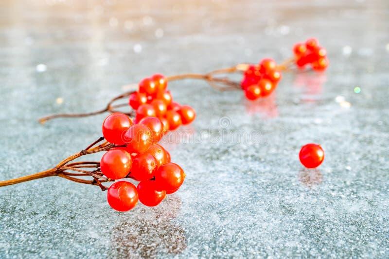 Красные ягоды на льде зимы, sprigs калины на пруде льда стоковые изображения rf