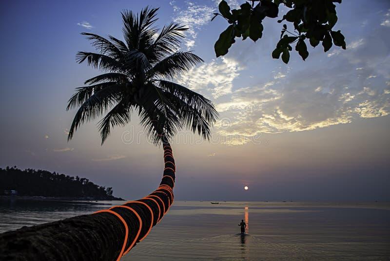 Красота кокосовых пальм и туристов идя в море во время захода солнца на пляже салата Haad, koh Phangan в Suratthani Таиланде стоковое изображение rf