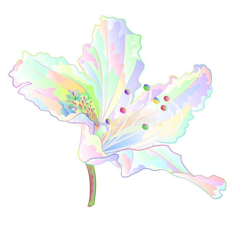 Красочный кустарник горы цветка света рододендрона на иллюстрации вектора белой предпосылки винтажной editable иллюстрация вектора