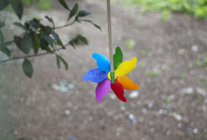 Красочный pinwheel повешенный к дереву стоковое фото