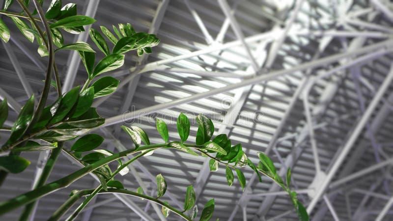 Крыша зеленого растения и металла - архитектура внутри современной прихожей дела стоковая фотография rf