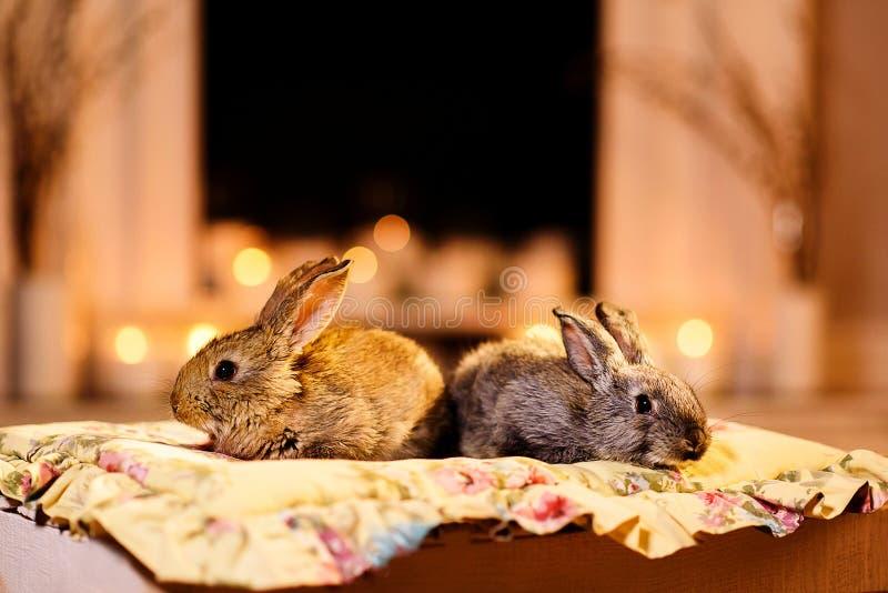 Кролик 2 камином стоковое изображение rf