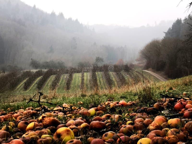 Ковер Яблока в лесе стоковая фотография