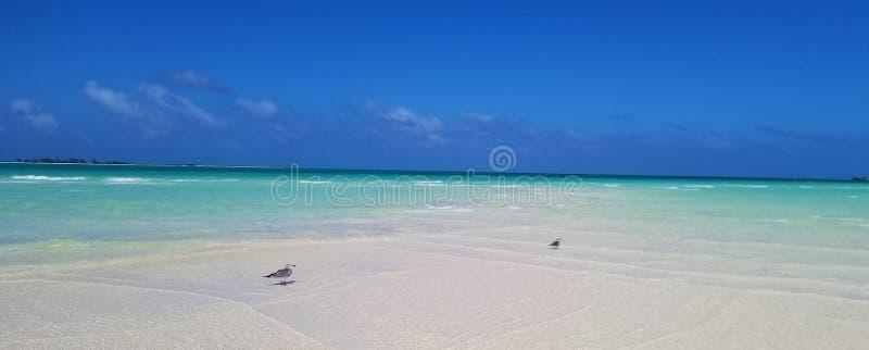 Кокосы Cayo, Куба - сногсшибательные виды на океан стоковые изображения