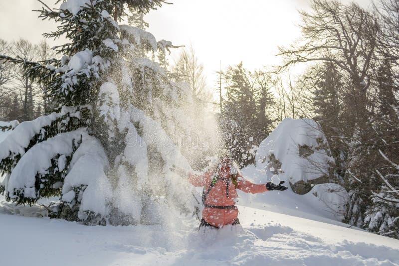 Колено Hiker глубоко в порошке играя со снегом, бросая его вверх в воздухе, около ели со снегом покрыло ветви стоковые фото
