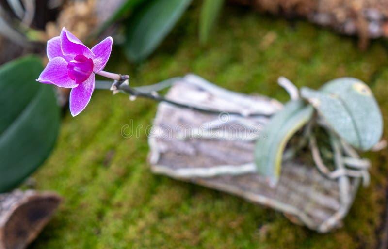 Конец-вверх головы цветка орхидеи в цветени стоковые изображения