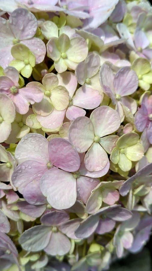 Конец вверх по зацветая цветкам стоковое фото