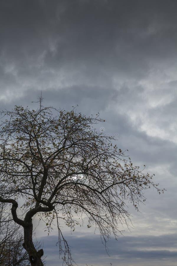 Контур дерева стоковое фото rf