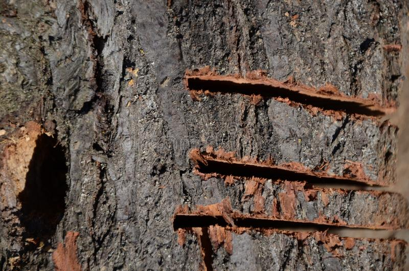 Дерево с янтарем своими руками фото нас собраны