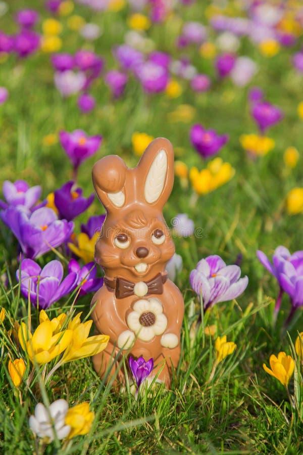 Концепция праздников пасхи Зайчик или кролик сладкого шоколада пасхи стоковое изображение rf
