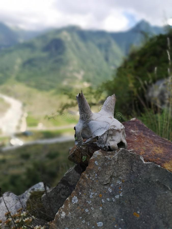 Косточка животного в горах стоковая фотография rf