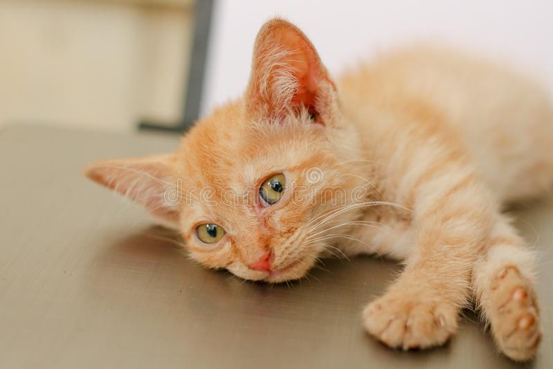 Котенок лежа и смотря к камере стоковая фотография rf