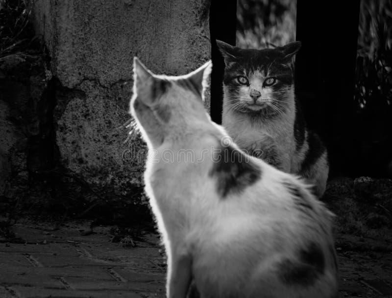 Коты улицы смотря один другого, Izmir, Турцию стоковое фото