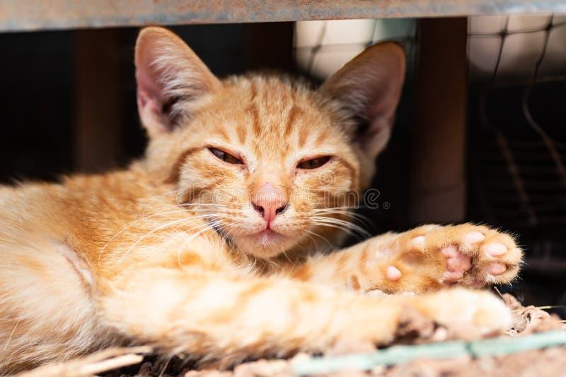 Кот имбиря кладет вниз на том основании стоковое изображение rf