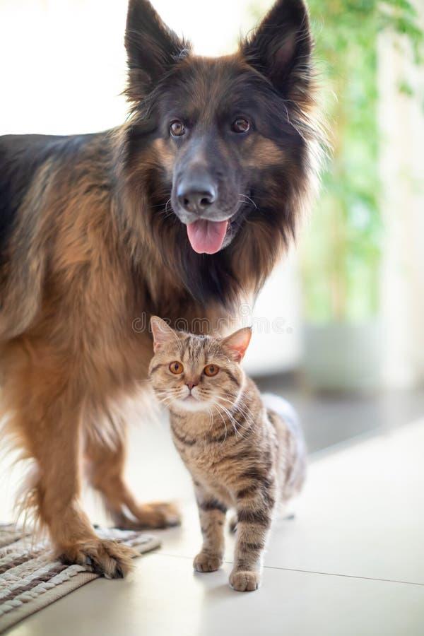 Кот и собака живя совместно Приятельство между животными стоковая фотография rf