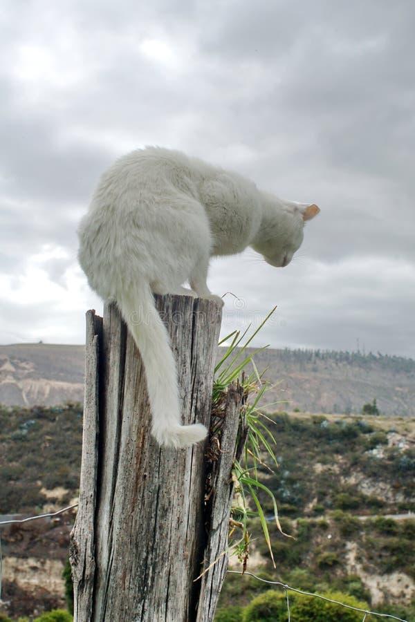 Кот на столбе стоковая фотография