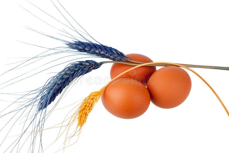3 коричневое или красные яйца и изолированная предпосылка декоративных ушей пшеницы белая стоковые фотографии rf