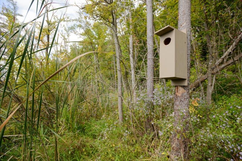 Коробка вложенности деревянной утки в болоте стоковая фотография rf