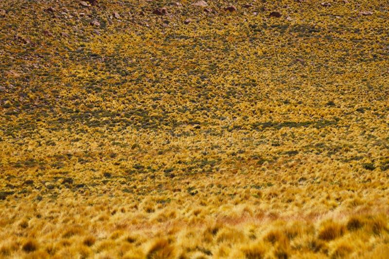 Ландшафты пустыни Atacama, Чили стоковые фото