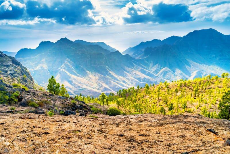 Ландшафт горы с зелеными соснами стоковое фото rf