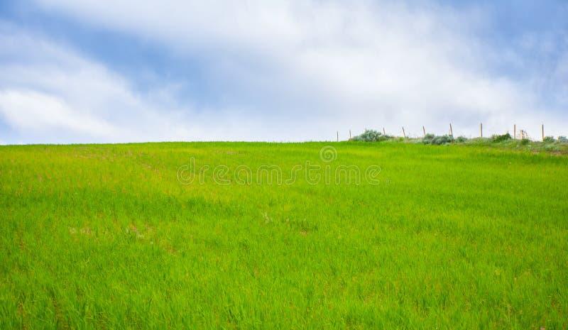 Ландшафт зеленого поля травянистый стоковая фотография