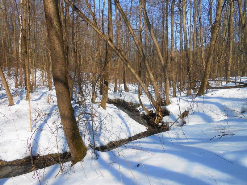 Ландшафт леса с деревьями в начале весны с идущим потоком стоковая фотография rf