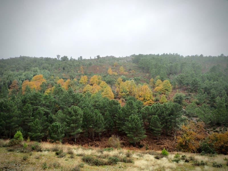 Ландшафт деревьев и леса горы стоковая фотография rf