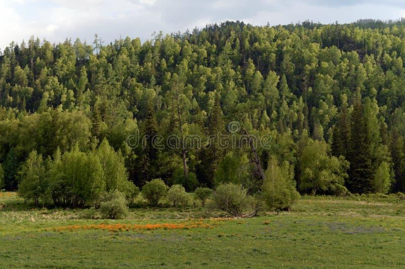 Ландшафт около реки Ursul, республика горы Altai, Сибирь, Россия стоковое изображение rf