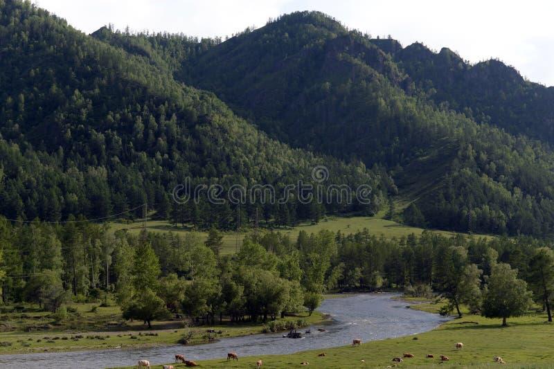 Ландшафт около реки Ursul, республика горы Altai, Сибирь, Россия стоковая фотография rf