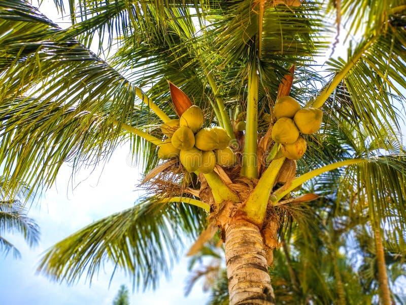 Ладонь кокоса на пляже в Tailand стоковая фотография