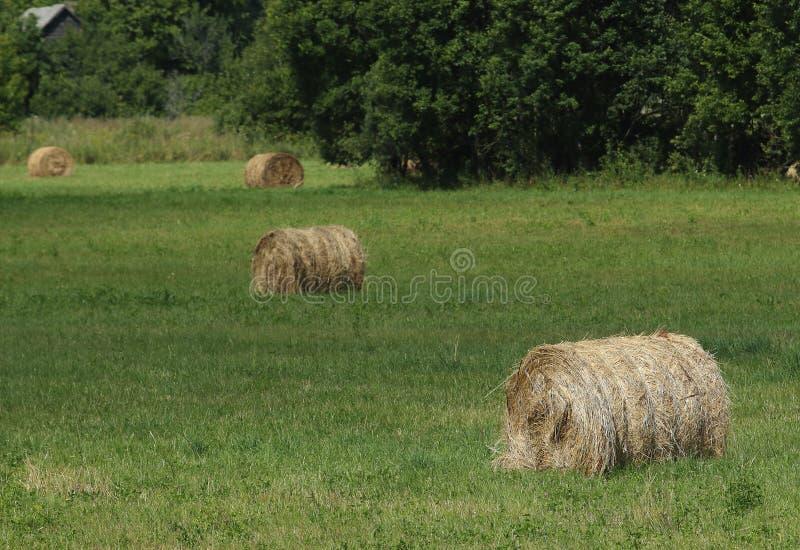 Латышская сельская местность стоковое изображение