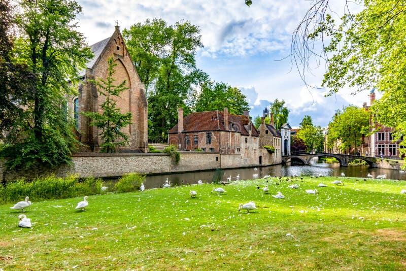 Лебеди на озере влюбленности и Beguinage, Брюгге, Бельгии стоковые фотографии rf