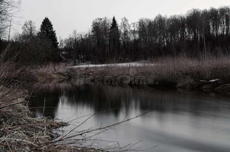 Лебедь на лете озера стоковое изображение