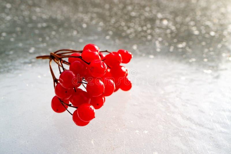 Лежать на льде ветви пруда красной калины стоковое изображение