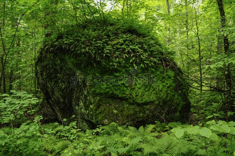 Ледниковое перекатное, район дикой природы зазубрины Hoffman, заповедник леса Adirondack, Нью-Йорк стоковая фотография