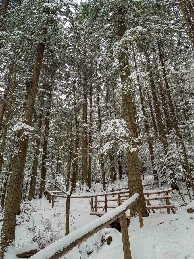 Лестницы Snowy с поручнями в польских горах стоковая фотография rf