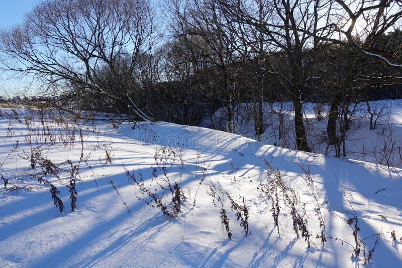 Лес зимы с деревьями покрыл снег стоковое фото