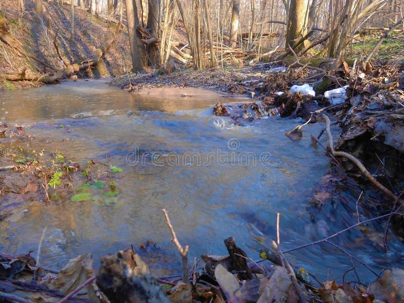 Лес идущего потока весной в солнечном ясном дне стоковое фото