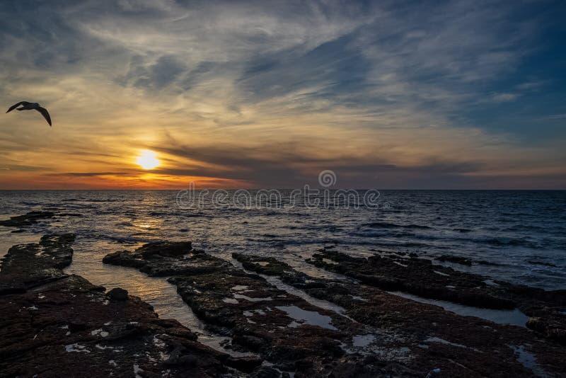 Летание чайки над побережьем Тихого океана во время захода солнца стоковое фото rf