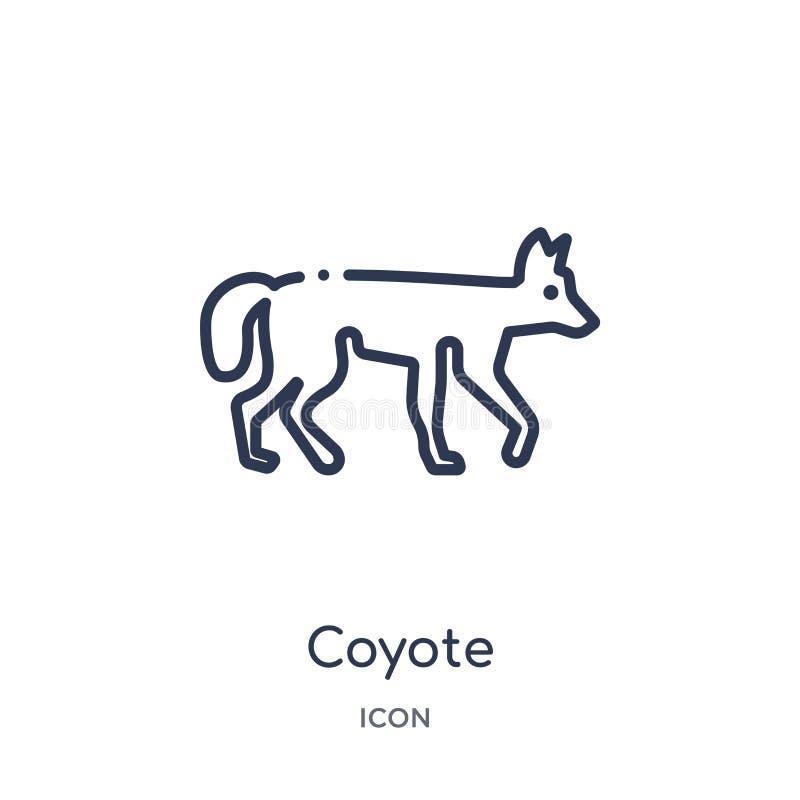 Линейный значок койота от животных и собрания плана живой природы Тонкая линия вектор койота изолированный на белой предпосылке к иллюстрация вектора
