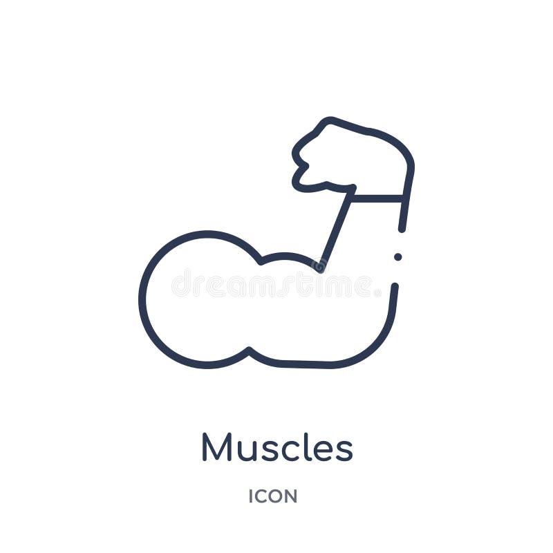 Линейный значок мышц от спортзала и собрания плана фитнеса Тонкая линия значок мышц изолированный на белой предпосылке мышцы ульт бесплатная иллюстрация